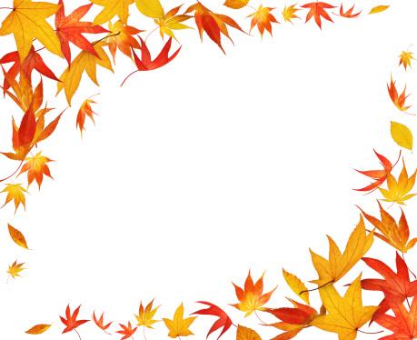 かえでの葉「秋のフレーム」:スマホ壁紙(14)