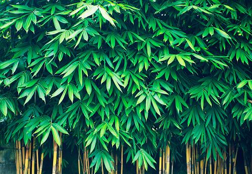 Grove「Bamboo」:スマホ壁紙(4)