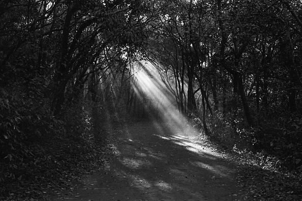 Scenics - Nature「Forest Path」:写真・画像(14)[壁紙.com]