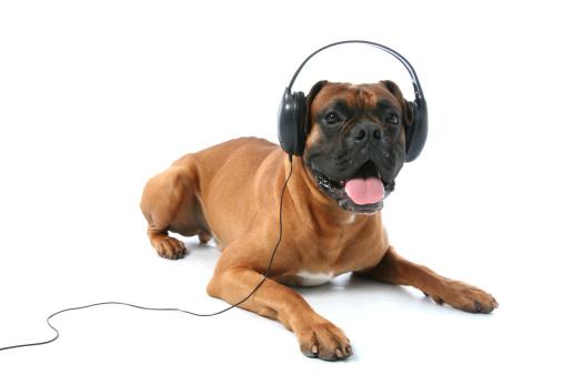 Boxer - Dog「Dj」:スマホ壁紙(12)