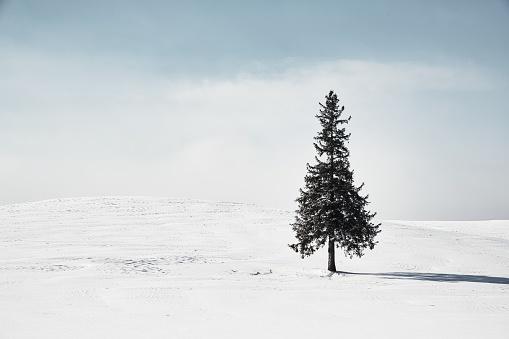 Hokkaido「Winter scenery. Biei Hokkaido Japan」:スマホ壁紙(5)
