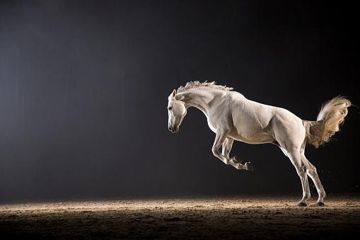 Horse「Horse galloping」:スマホ壁紙(15)
