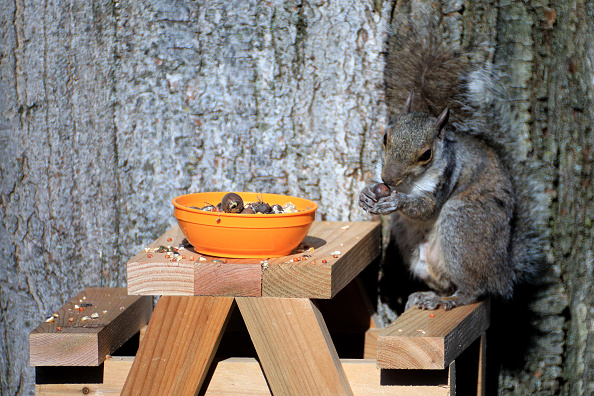 Gray Squirrel「Squirrel In The Morning Sun」:写真・画像(11)[壁紙.com]