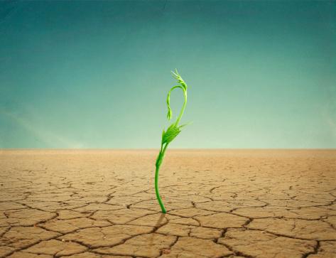 Drought「sprout in desert」:スマホ壁紙(10)