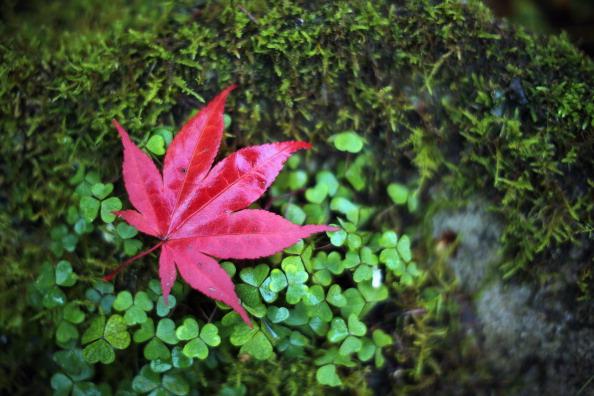 Heat - Temperature「British Countryside Display Beautiful Autumn Colours」:写真・画像(15)[壁紙.com]