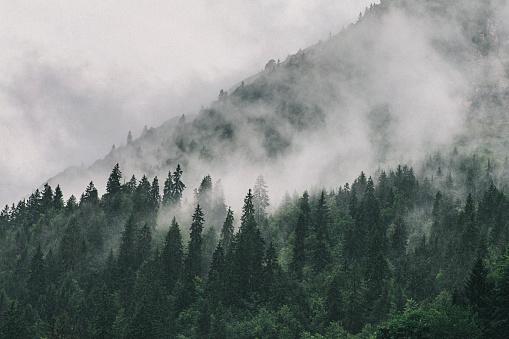 Fog「Clouds sitting in Alpine Trees」:スマホ壁紙(16)