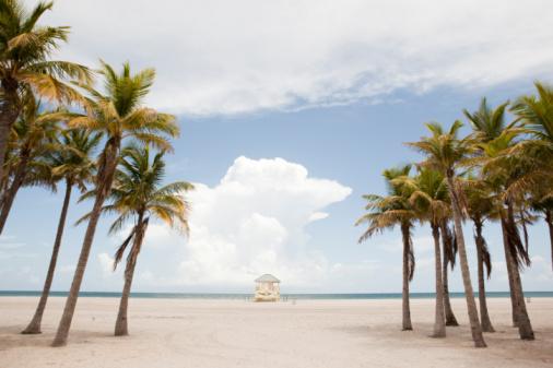 Gulf Coast States「Lifeguard stand, palm trees」:スマホ壁紙(1)