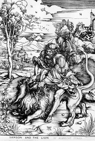 Big Cat「Samson And Lion」:写真・画像(12)[壁紙.com]