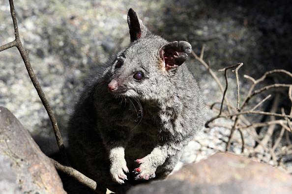 Animal「Residents Visit Homes Destroyed By Bush fires In Perth Hills」:写真・画像(19)[壁紙.com]