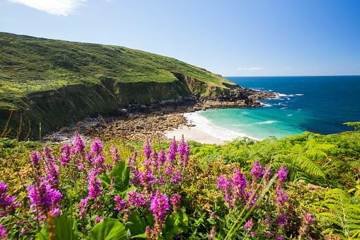 Wildflower「Cornish coastal scenery at Porthmeor Cove near Zennor, UK」:スマホ壁紙(19)