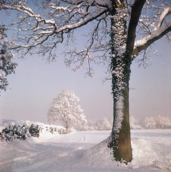 Tree「Snow Fall」:写真・画像(8)[壁紙.com]