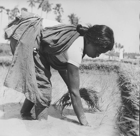 Working「Woman Planting」:写真・画像(9)[壁紙.com]