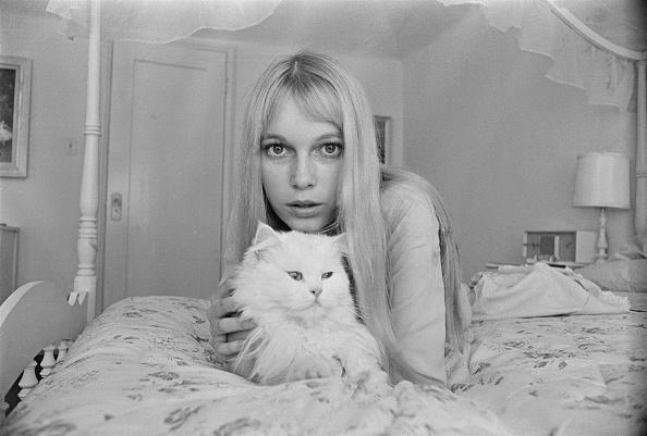 Purebred Cat「Mia Farrow」:写真・画像(11)[壁紙.com]