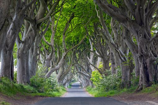 Alley「The Dark Hedges, Northern Ireland」:スマホ壁紙(11)