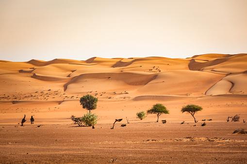 East「trees in the wahiba sand desert of sultanate of oman」:スマホ壁紙(4)