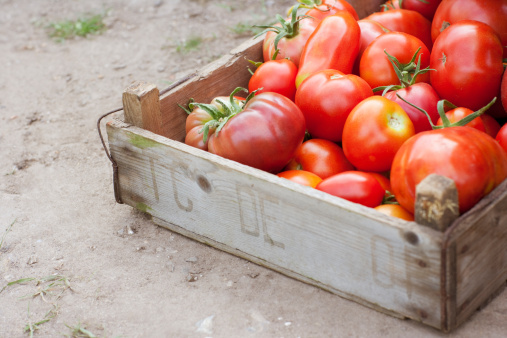 Norfolk - England「Crate of organic tomatoes」:スマホ壁紙(6)