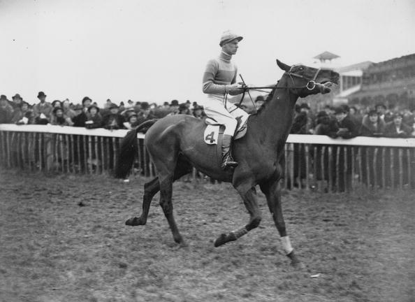 Horse「Golden Miller」:写真・画像(9)[壁紙.com]