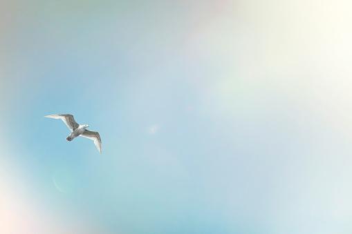 Seagull「seagull mid flight on blue sky and sun flare」:スマホ壁紙(19)
