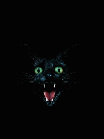 Ominous「Black cat baring fangs」:スマホ壁紙(15)