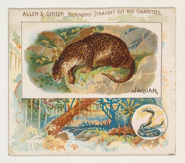 Big Cat「Jaguar」:写真・画像(19)[壁紙.com]