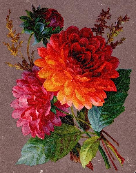 Bouquet「Dahlia」:写真・画像(14)[壁紙.com]