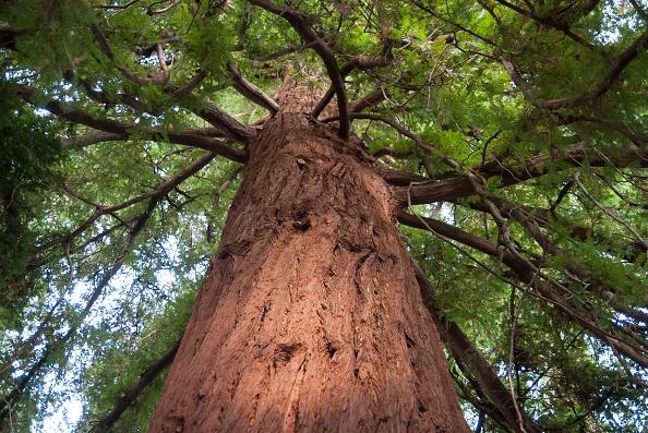 Tree「London」:写真・画像(7)[壁紙.com]