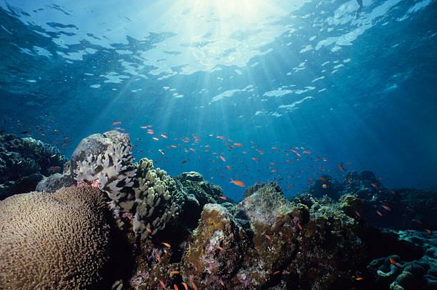 Close-up underwater shot of a colorful reef:スマホ壁紙(壁紙.com)