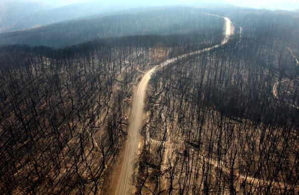 Forest「Death Toll Nears 200 As Bushfires Continue To Blaze Through Victoria」:写真・画像(18)[壁紙.com]