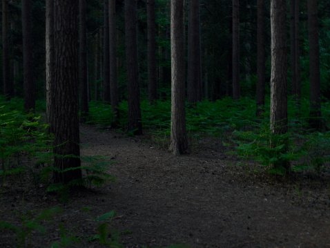 Dirt Road「Dirt track through forest」:スマホ壁紙(8)