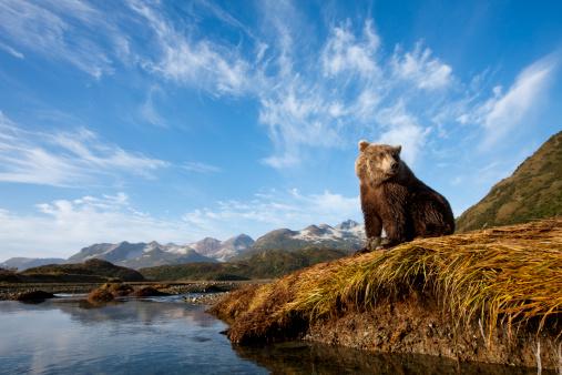 コースト山脈「Coastal Brown Bear, Katmai National Park, Alaska」:スマホ壁紙(10)
