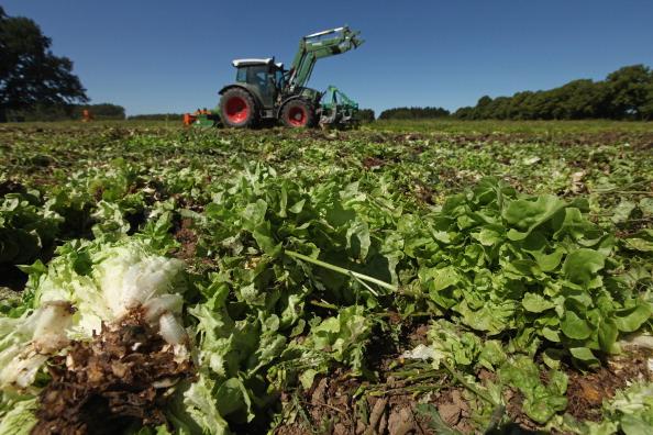 田畑「Farmers Fear Ruin Following EHEC Outbreak」:写真・画像(19)[壁紙.com]