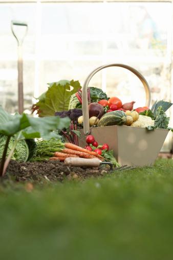 Gardening「Basket of assorted vegetables in field」:スマホ壁紙(14)