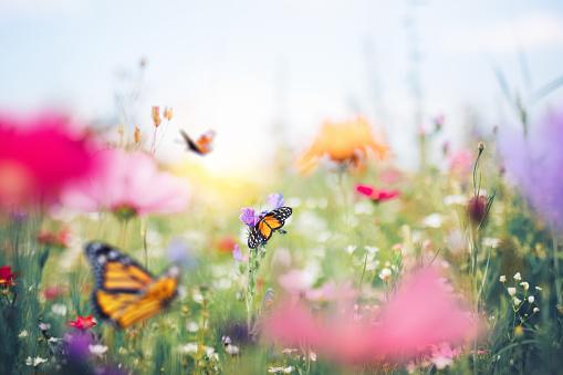 Wildflower「Colorful Summer Meadow」:スマホ壁紙(11)