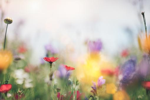 Flowerbed「Colorful Summer Meadow」:スマホ壁紙(13)