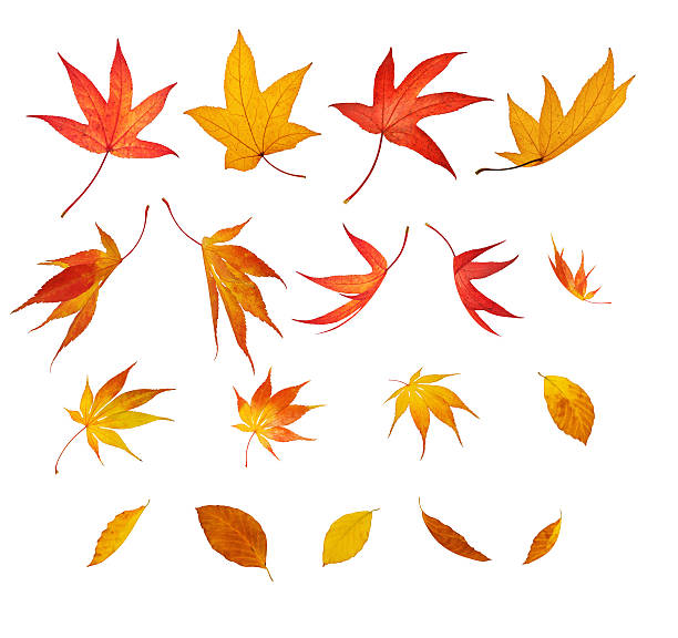 絶縁落ちる秋の葉:スマホ壁紙(壁紙.com)
