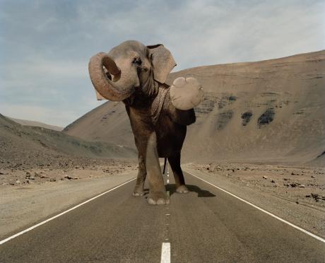 Digital Composite「Elephant halts traffic in a desert road」:スマホ壁紙(14)
