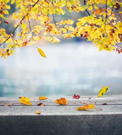かえでの葉「秋の湖」:スマホ壁紙(1)