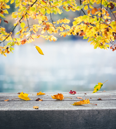 November「Autumn By The Lake」:スマホ壁紙(19)