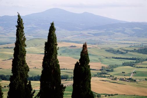 Monte Amiata「CYPRESS TREES, TUSCANY ITALY」:スマホ壁紙(3)