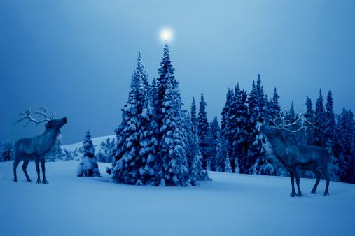 reindeer「TWO REINDEER LOOKING AT CHRISTMAS STAR IN EVENING」:スマホ壁紙(5)