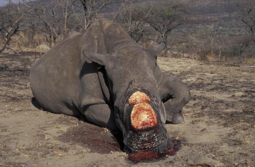 背景「POACHED RHINOCEROS. SOUTH AFRICA. BLOOD」:スマホ壁紙(19)