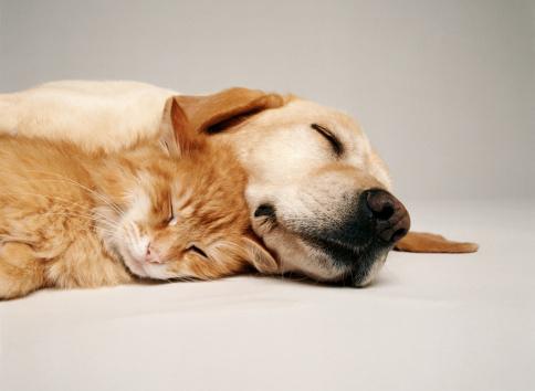 Friendship「CAT AND DOG TOGETHER」:スマホ壁紙(10)