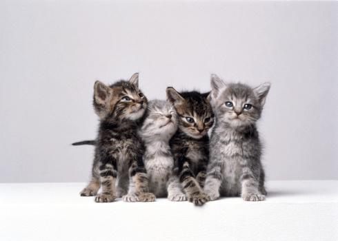 Mammal「KITTENS」:スマホ壁紙(14)
