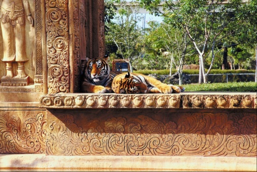 Tiger「23896318」:スマホ壁紙(9)