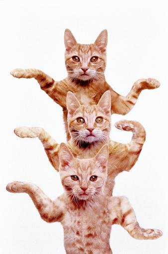 Three Animals「THREE EGYPTIAN CATS」:スマホ壁紙(14)