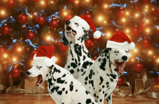 Singer「3 SINGING DOGS WITH SANTA HATS WITH TREE」:スマホ壁紙(12)