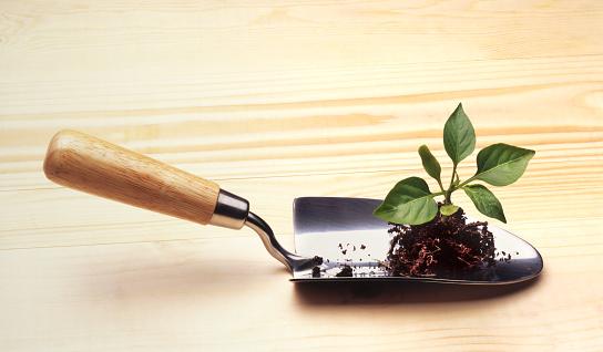 Planting「SWEET PEPPER PLANT ON TROWEL」:スマホ壁紙(2)