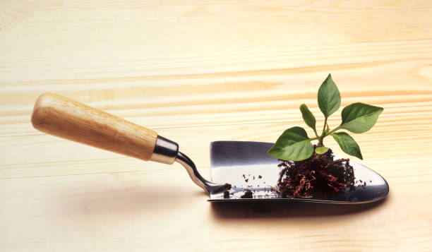 SWEET PEPPER PLANT ON TROWEL:スマホ壁紙(壁紙.com)