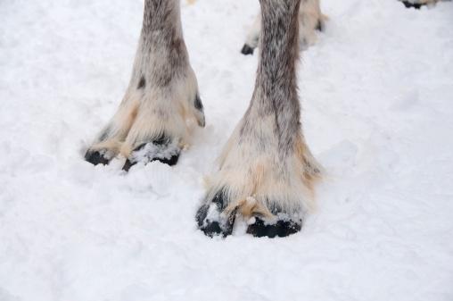 reindeer「-」:スマホ壁紙(4)