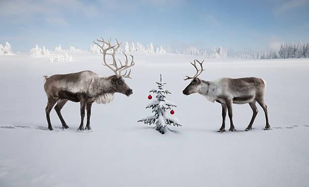 TWO REINDEER LOOKING AT CHRISTMAS TREE:スマホ壁紙(壁紙.com)